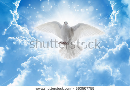 stock-photo-holy-spirit-bird-flies-in-skies-bright-light-shines-from-heaven-white-dove-symbol-of-love-and-593507759